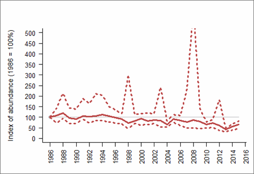 Figure 1: Trend in abundance index (solid line) of black-legged kittiwake in Wales, 1986-2015 with 95% confidence limits (dotted lines). Based on SMP data; view the methods of analysis (PDF 158 kb).