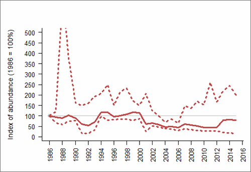 Figure 1: Trend in abundance index (solid line) of natural-nesting Herring gull in England, 1986-2015 with 95% confidence limits (dotted lines). Based on SMP data; view the methods of analysis (PDF 158 kb).