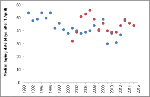 Figure 3: Median laying date of guillemots on Skomer (Dyfed, blue dots) and Sumburgh Head (Shetland, red dots), 1991-2015
