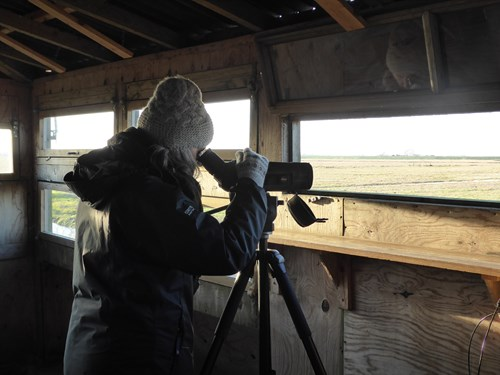 A birdwatcher in a hide looking through a telescope. Copyright Anna Robinson.