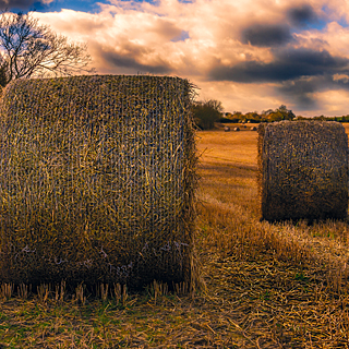 UK countryside landscape featuring large round hay bales © Richard Digimist/Creative Commons License