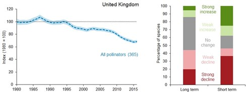 A line graph showing the change in the unsmoothed UK pollinators index from 1980 to 2016. The index peaked in 1987 at 107% of its baseline value but has since fallen to a low of 68% of its baseline value in 2015. A 100% stacked bar chart showing the percentage of individual UK polinator species that have either increased, decreased or shown no change in distribution over the long term (1980 to 2016) and the short term (2011 to 2016).