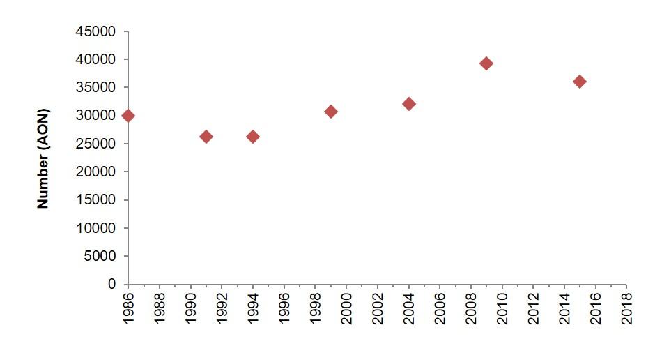 Northern gannet (Morus bassanus) | JNCC - Adviser to