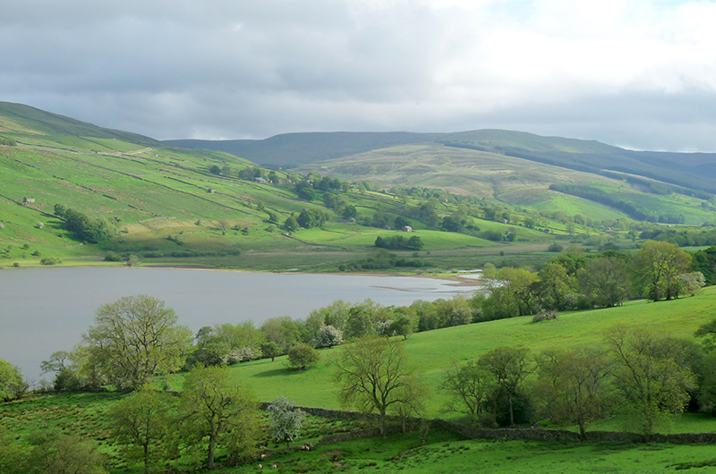 A view of a reservoir in the Yorkshire Dales. In the foreground are trees and grassland with cattle. Behind the reservoir there are grassy hills with trees, stone walls, and a few small buildings. Photo by Anna Robinson.