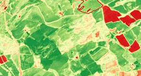 A Normalised Difference Vegetation Index image calculated from Sentinel-2 imagery of an area in the Scottish lowlands. Most of the image shows green patches, which indicate healthy vegetation. Some yellow, orange and red patches are also shown.
