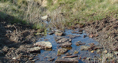 A patch of boggy ground and moorland. A pool of water is surrounded by grasses. In the pool, several large rocks are exposed. Photo by Anna Robinson.