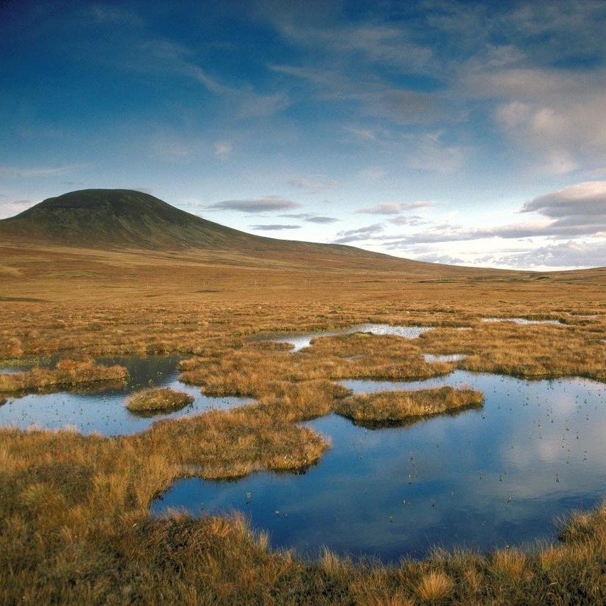 Photograph of blanket bog habitat in Caithness