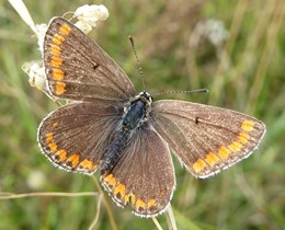 Statistics released on butterfly trends