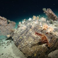 Coral garden island, (Courtesy of the NERC funded Deep Links Project - Plymouth University, Oxford University, JNCC, BGS).